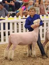 Wininger Club Lambs | Winners